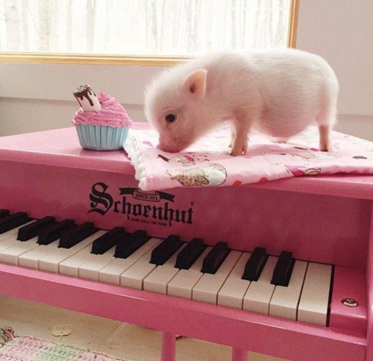 musik und schwein das sch nste was es gibt schweine pinterest schweinchen das sch nste. Black Bedroom Furniture Sets. Home Design Ideas
