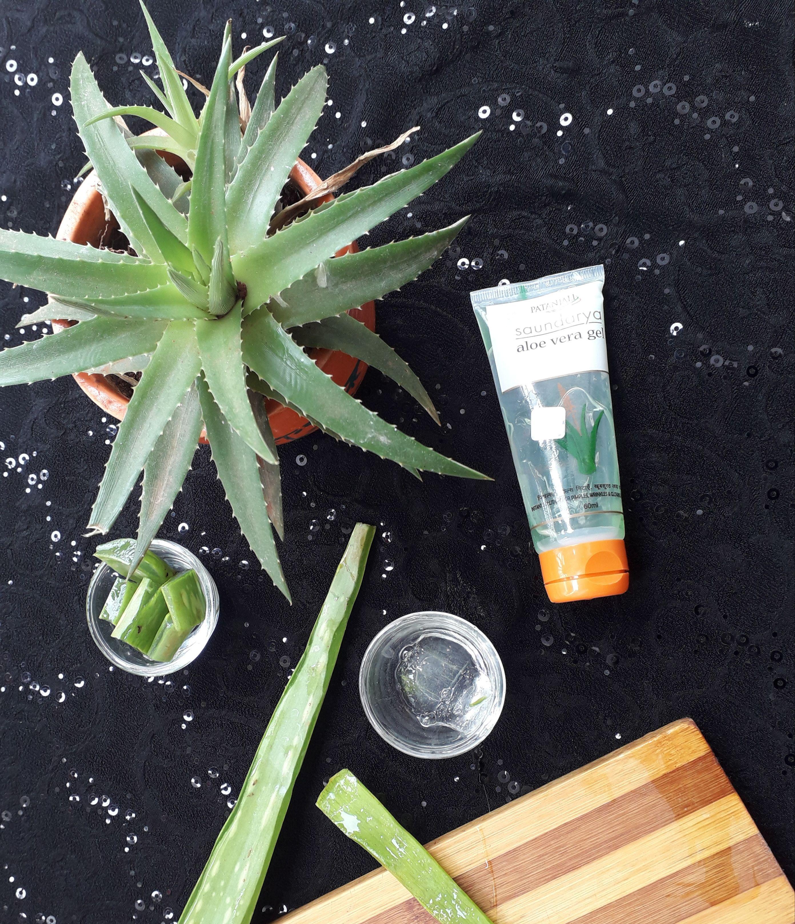 4 Ways To Include Aloe Vera In Your Daily Routine Aloe Vera Aloe Hair Care Routine