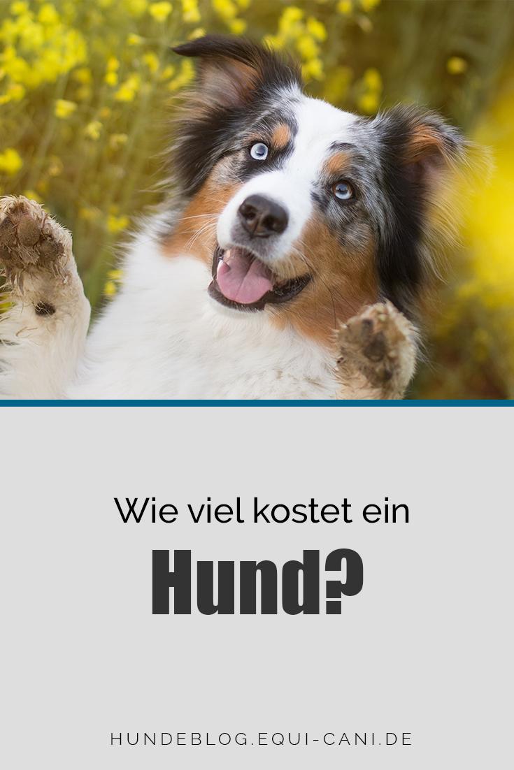 Pin Auf Hunde Liebe