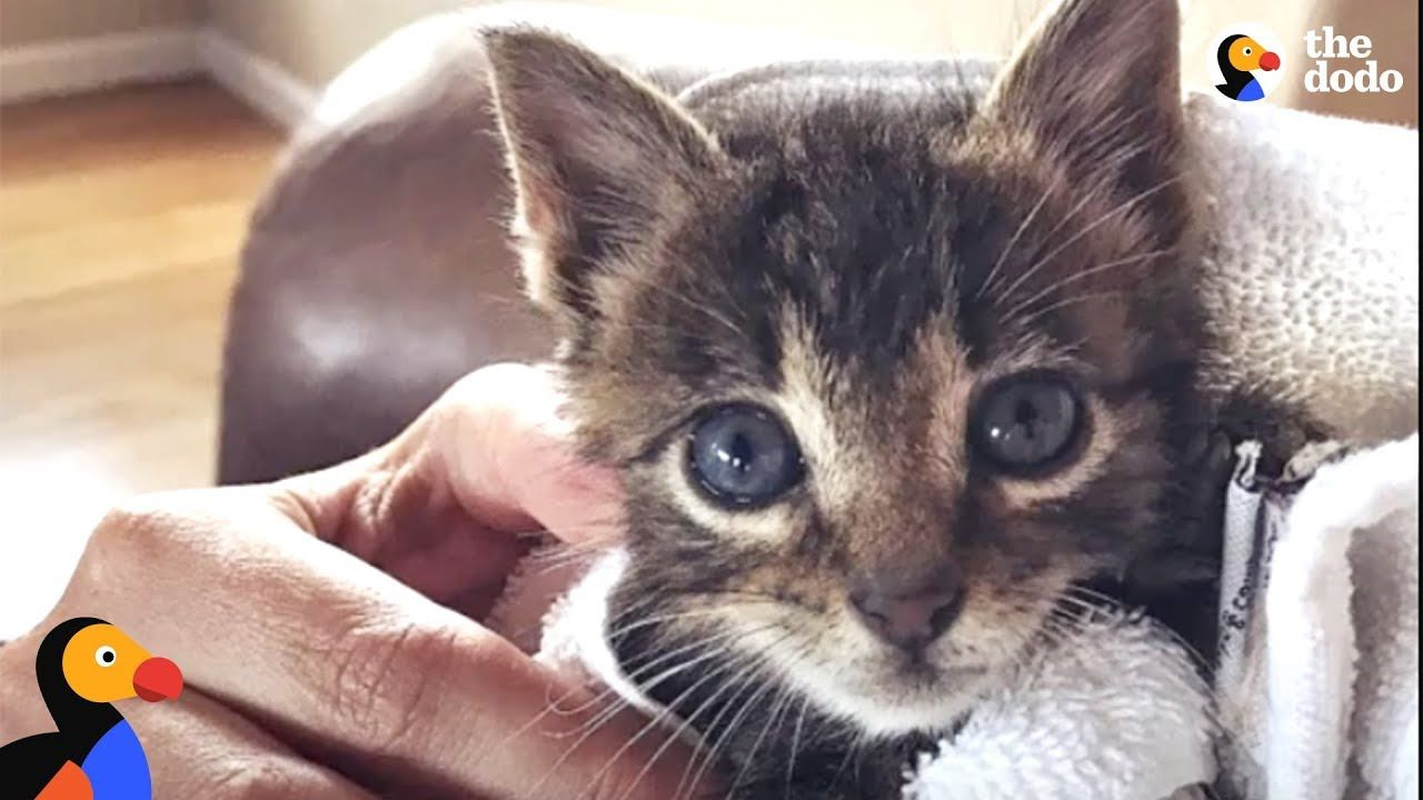 Tiny Kitten Becomes An Adventure Cat Like His Brother The Dodo Adventure Cat Tiny Kitten Kitten