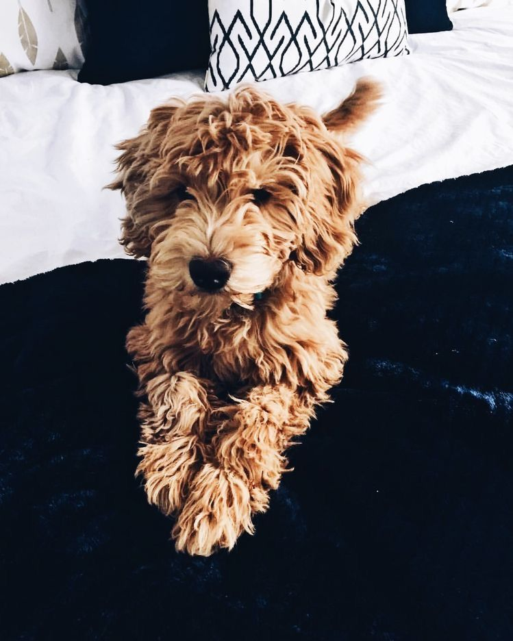 pinterest hollyparrker Cute baby animals, Puppies, Dogs