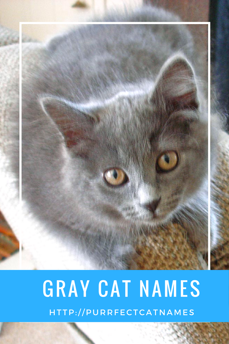 How to choose a name for a kitten