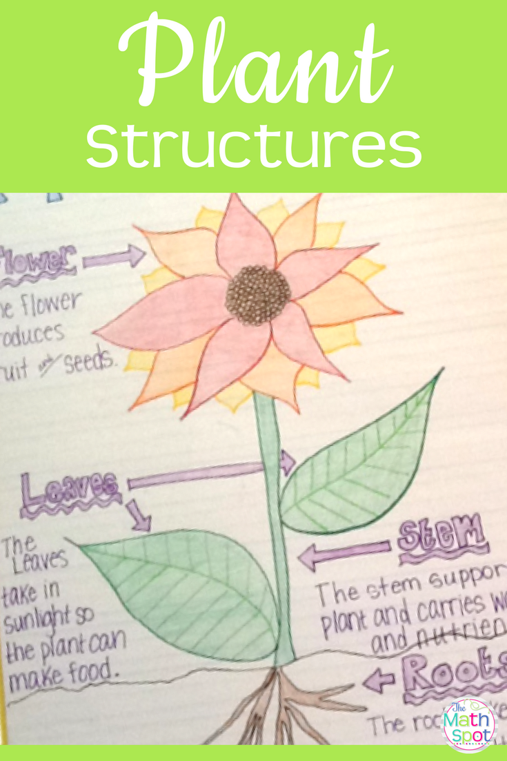 kindergarten plant projects