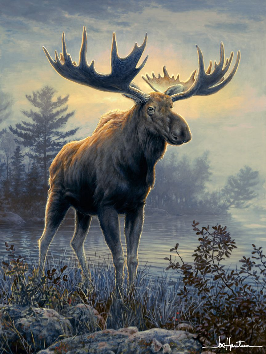 Art Hautman Brothers Beautiful Wildlife Moose