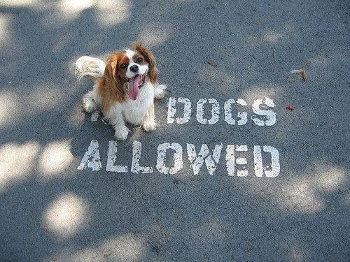 Dogs allowed ha!