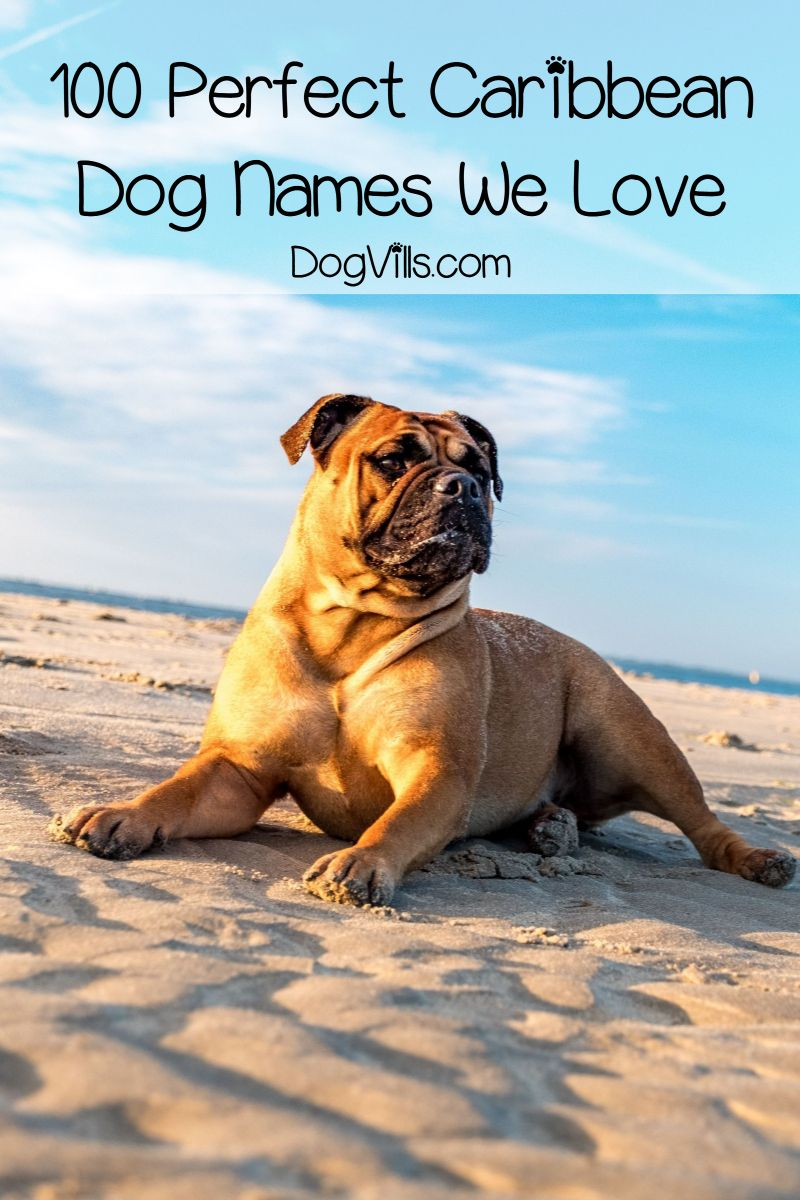 100 Perfect Caribbean Dog Names for Male & Female Pups