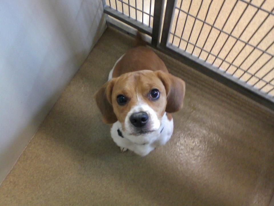 Family Fights To Save The Beagle That Bit Their Child Orange