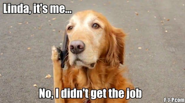 Dog Job Interview Phone Call Dogs Funny Animals Dogs Of The World