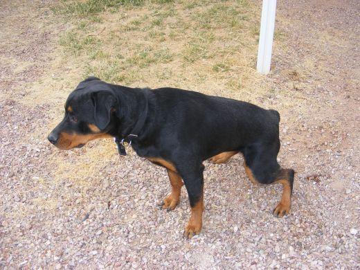 Home Remedies For Dog Diarrhea Dog Urine Dogs Dog Remedies
