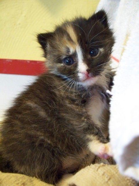 Pictures Of Kitten Cats Acat Lika Z Mit Bildern Katzen