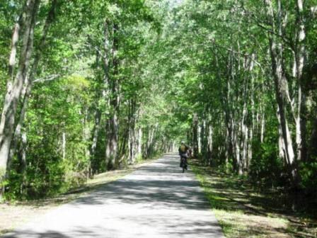 Top 10 Florida Bike Trails Bike Trails Hiking In Florida