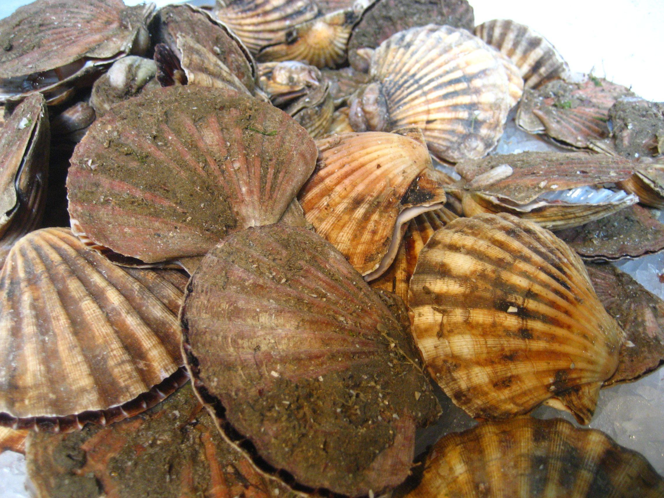 Scallops In The Shell Scallops Seafood Shellfish Food Shellfish Pot Roast Food