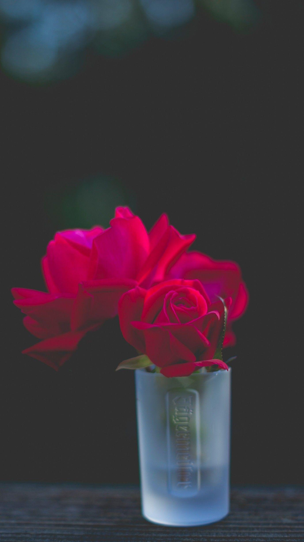 Flowers Hd Wallpaper Rose Flower Wallpaper Wallpaper Hd Wallpaper