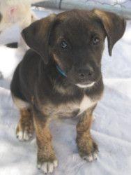 Rex Is An Adoptable Shepherd Dog In Santa Cruz Ca Rex Is 3