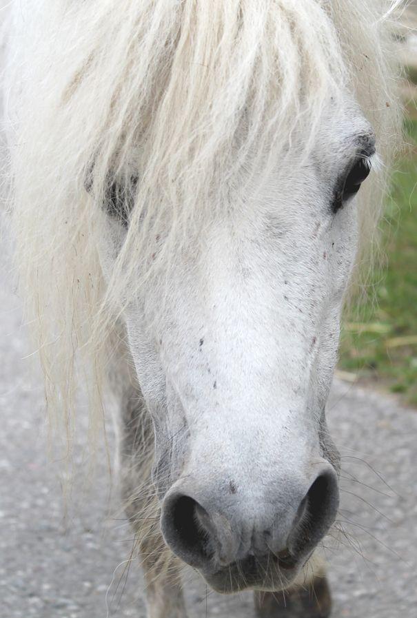Horses At Gut Aiderbichl Animal Sanctuary In Salzburg Austria
