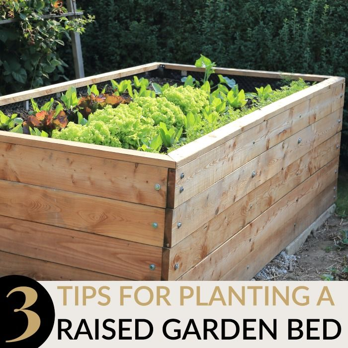 3 TIPS FOR PLANTING IN A RAISED GARDEN BED
