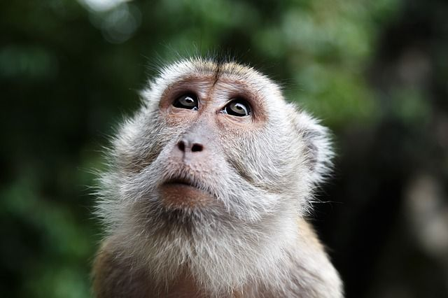 DaniRevi - Monkey Malaysia