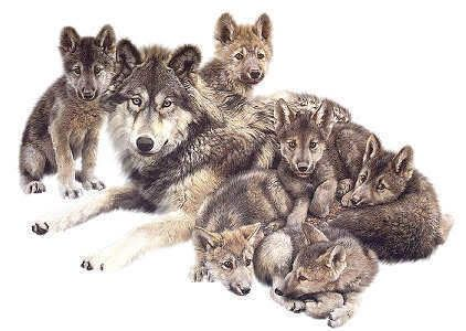 Mother Wolf And Cubs Cubs Tattoo Wolf Cool Artwork