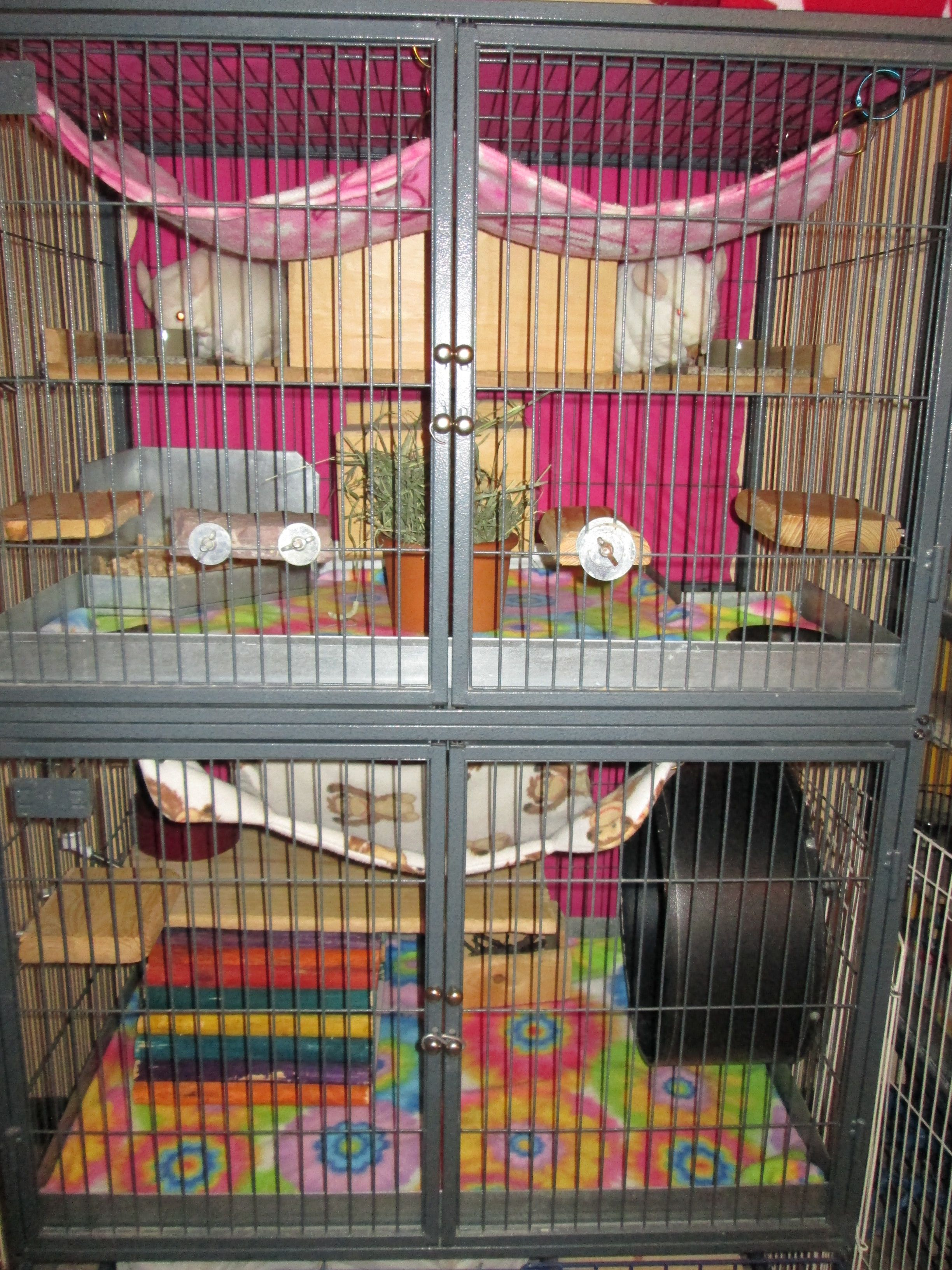 Ferret Nation Cage 2 Level Housing Two Chinchillas With Fleece Liners Fleece Hammocks A Chin Spin Wheel Etc Chinchilla Cage Ferret Nation Cage Rat Cage