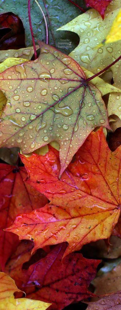 Die Farben Des Herbstes Autumn Rain Autumn Leaves Autumn Scenes