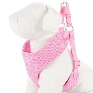 Petsmart Dog Therapy Training