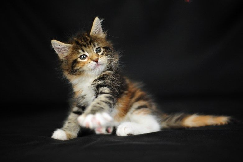 pin by kailey on cute animals pinterest animal