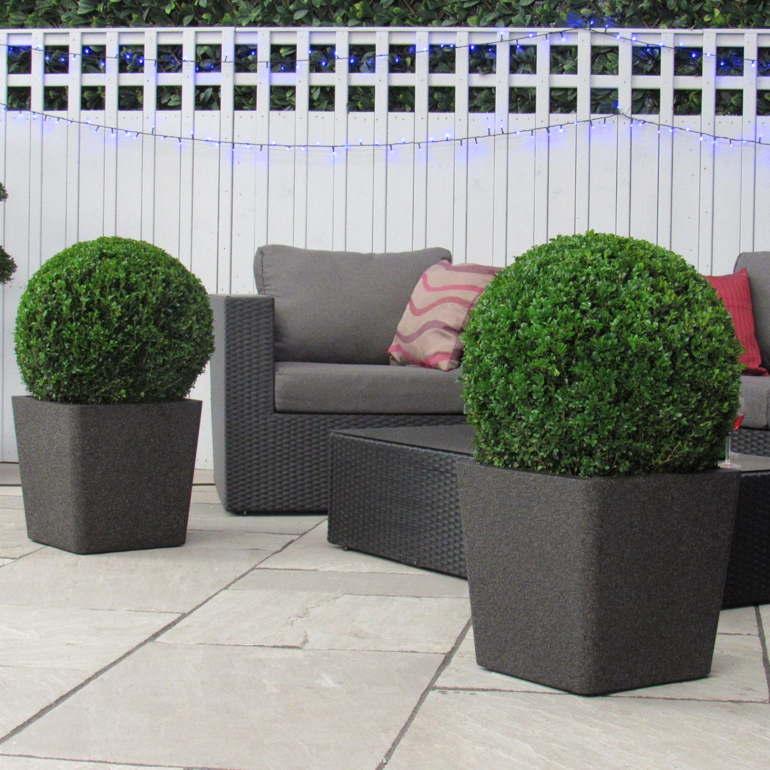 two large topiary buxus box tree ball 30cm door or patio planter