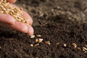 semine raccolte sowing harvest semado rikoltoj