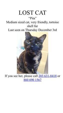 Lost Cat (Nicoll St, East Rock) © craigslist - Map data