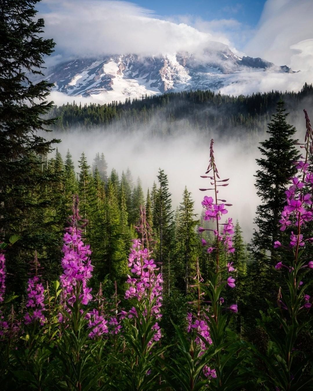 """National Geographic Your Shot on Instagram: """"Photo by Sam Austin @samsnaps77  I had a wonderful couple days visiting Mount Rainier recently. I was sad to see so many people leaving…"""""""