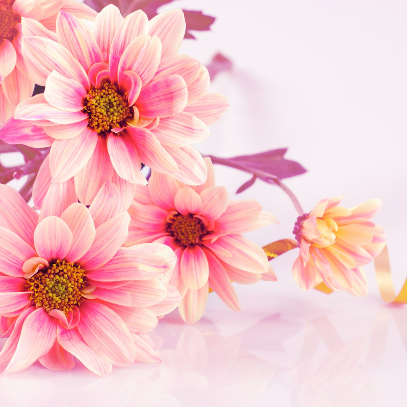 BEAUTIFUL FLOWER WALLPAPERS FREE TO DOWNLOAD Flower wallpaper