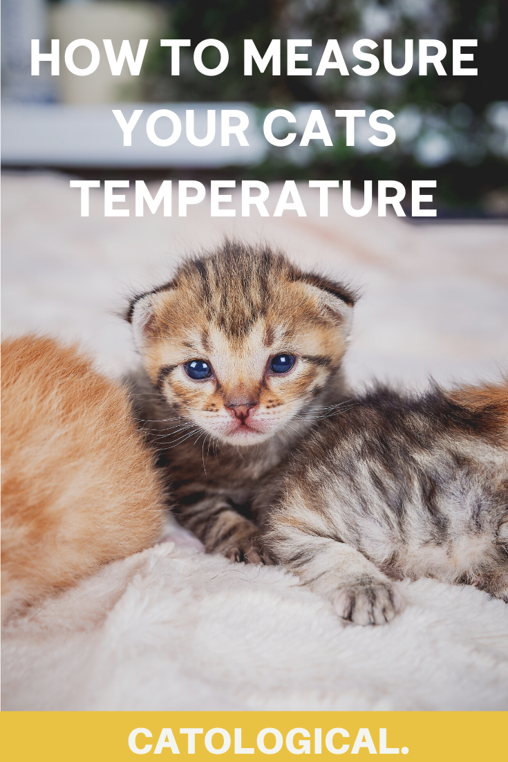 What Is A Normal Cat Internal Body Temperature And How To Measure In 2020 Cat Care Cat Skin Problems Senior Cat Care