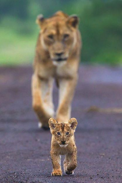 .PARTAGE OF AMAZING ANIMALS OF PLANET EARTH......... ON FACEBOOK........