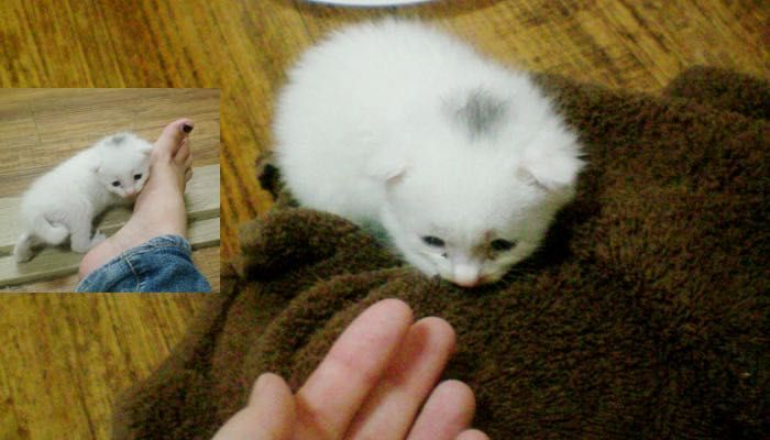 When Frightened Kitten Found in Pouring Rain Felt Love, Everything Changed.. - Love Meow