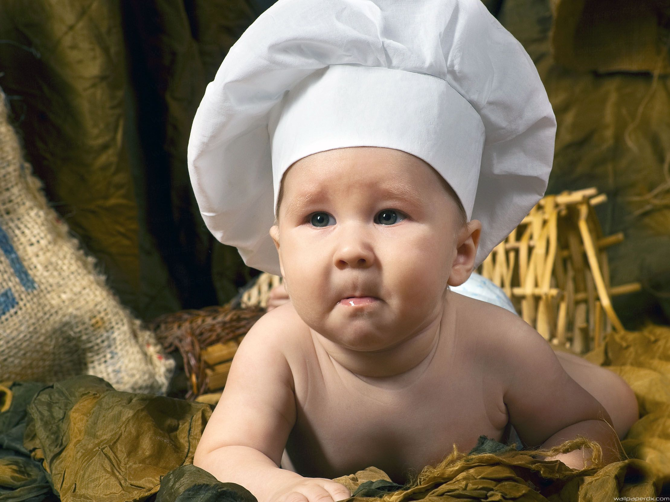 Download Cute Mouse Chef Wallpaper for Android Appszoom