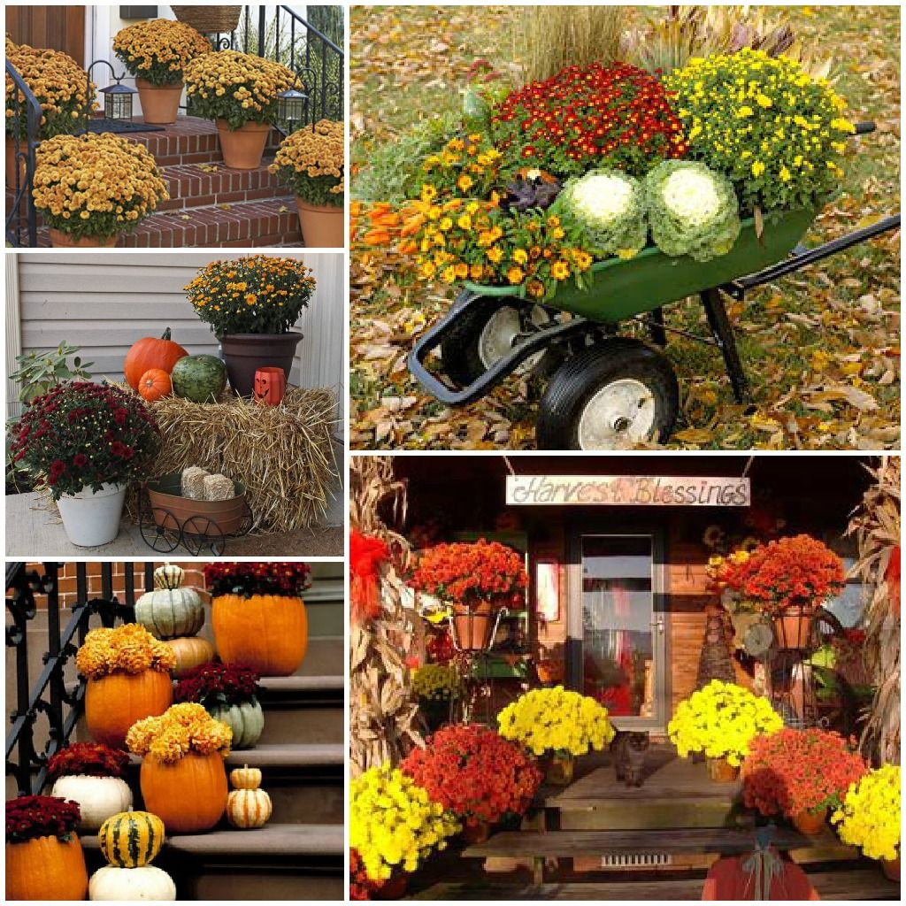 Doors pleasant fall decorating ideas for outside pinterest autumn - Attractive Outdoor Fall Decorations Ve Been Looking Up Fall Decor Ideas Using Chrysanthemums Since