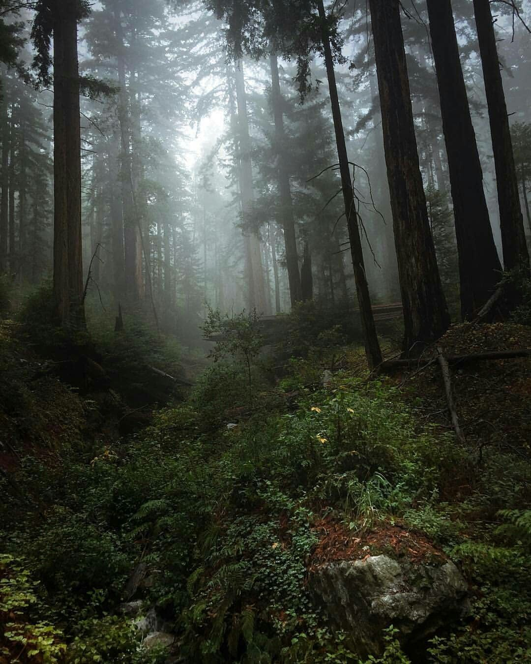 Foggy Forest Foggy Forest Forest Photography Forest Landscape