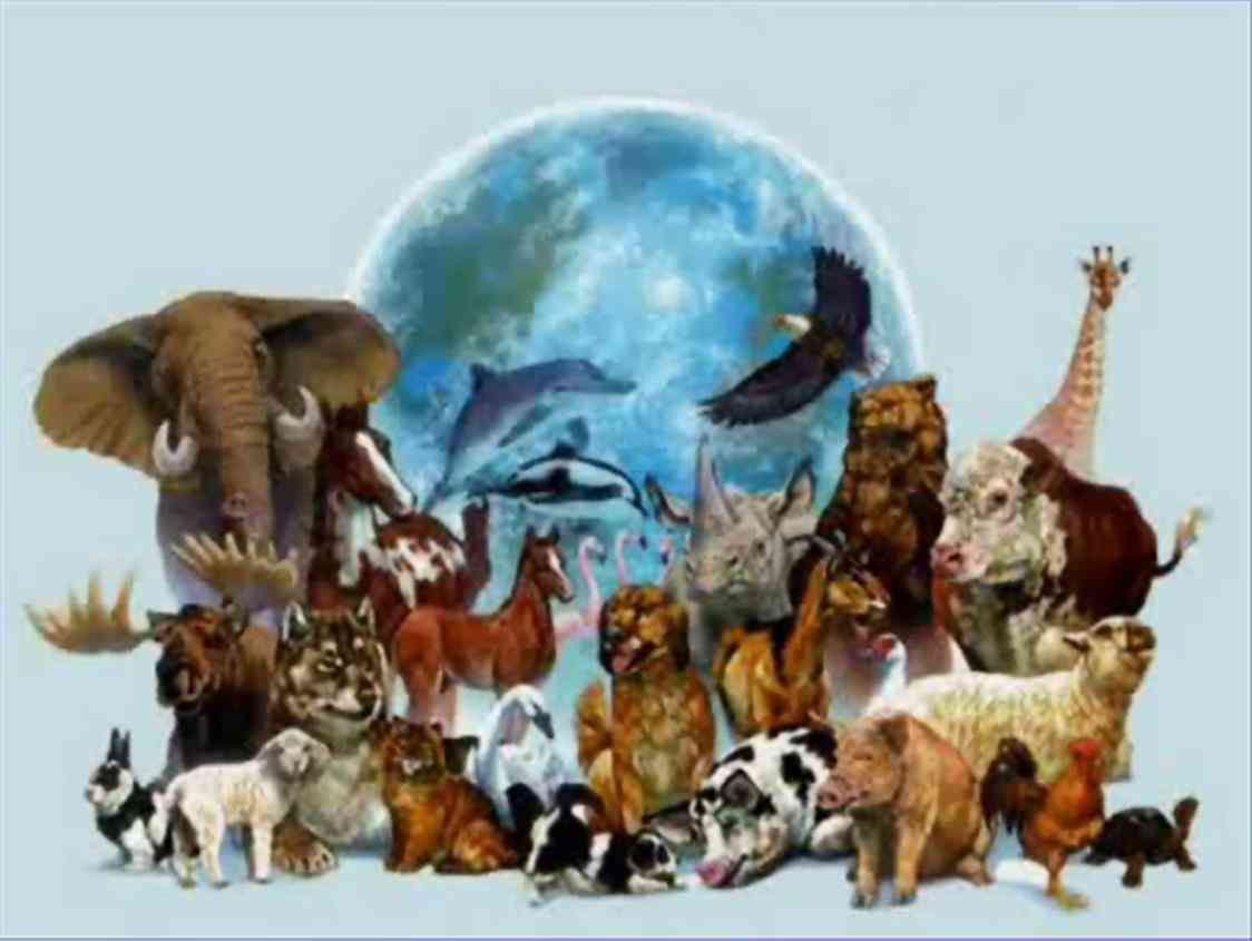 Гдз по биологии 9 класс ответы на вопросы мамонтов