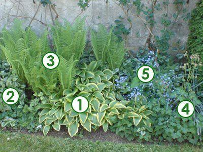 Au pied d 39 un mur l 39 ombre sc nes de jardins jardin for Plantes ombre exterieur nord