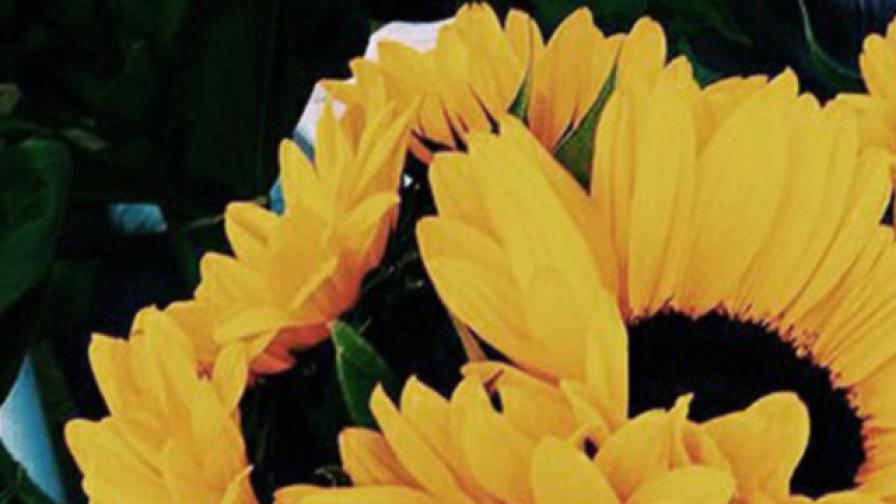 خلفيات ايفون جديدة Iphone Backgrounds 26 خلفيات ايفون Plants Photo