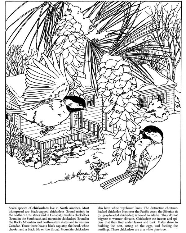 Nature Chickadees Image By Tharens Photobucket Bird Coloring Pages Coloring Pages Nature Coloring Pages