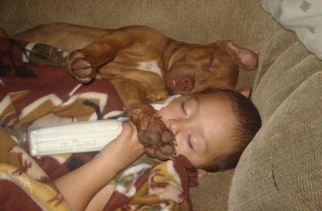 Cutest Pits Google Search Pitbull Puppies Nanny Dog