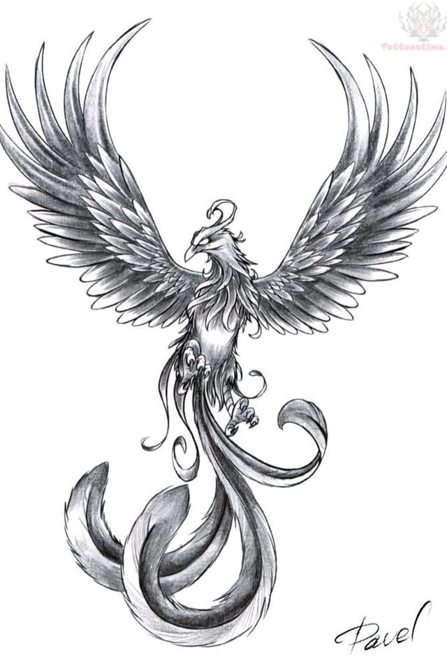 Phoenix A Symbol Of Energy And Rebirth Tattoo Ideas Pinterest