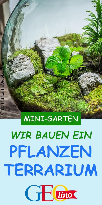 Zieht Pflanzen im Glas! is part of Bottle garden, Mini garden, Mini terrarium, Garden, Terrarium, Terrarium diy - Der Flaschengarten ist eine kleine Welt aus Pflanzen und Erde in einem Glas  Wie ihr einen Flaschengarten baut, erfahrt ihr hier!