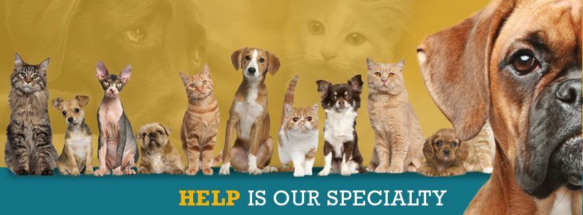Animal Welfare League Of Frederick County Cat And Dog Rescue And Adoptions Animal Welfare League Rescue Dogs Love Pet