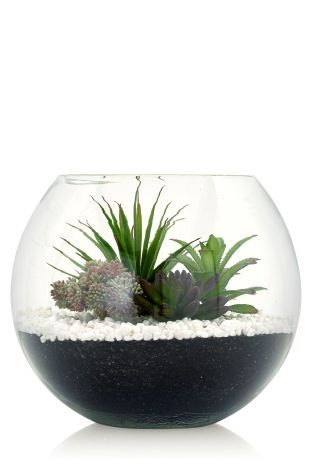Buy Succulent Terrarium Online Today At Next Israel Want It