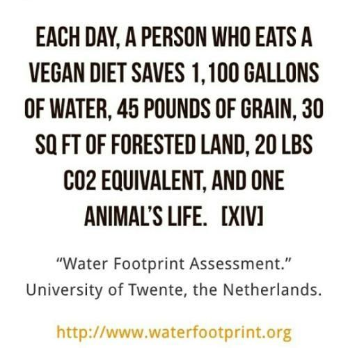 This Is Amazing You Have The Power To Save These Things Each And Every Day By Eating In A Vegan Plant Based Wa World Vegan Day Cowspiracy Reasons To Go Vegan