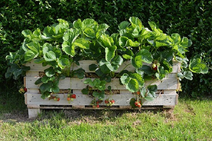 7 diy pallet projects pallets garden upcycle garden
