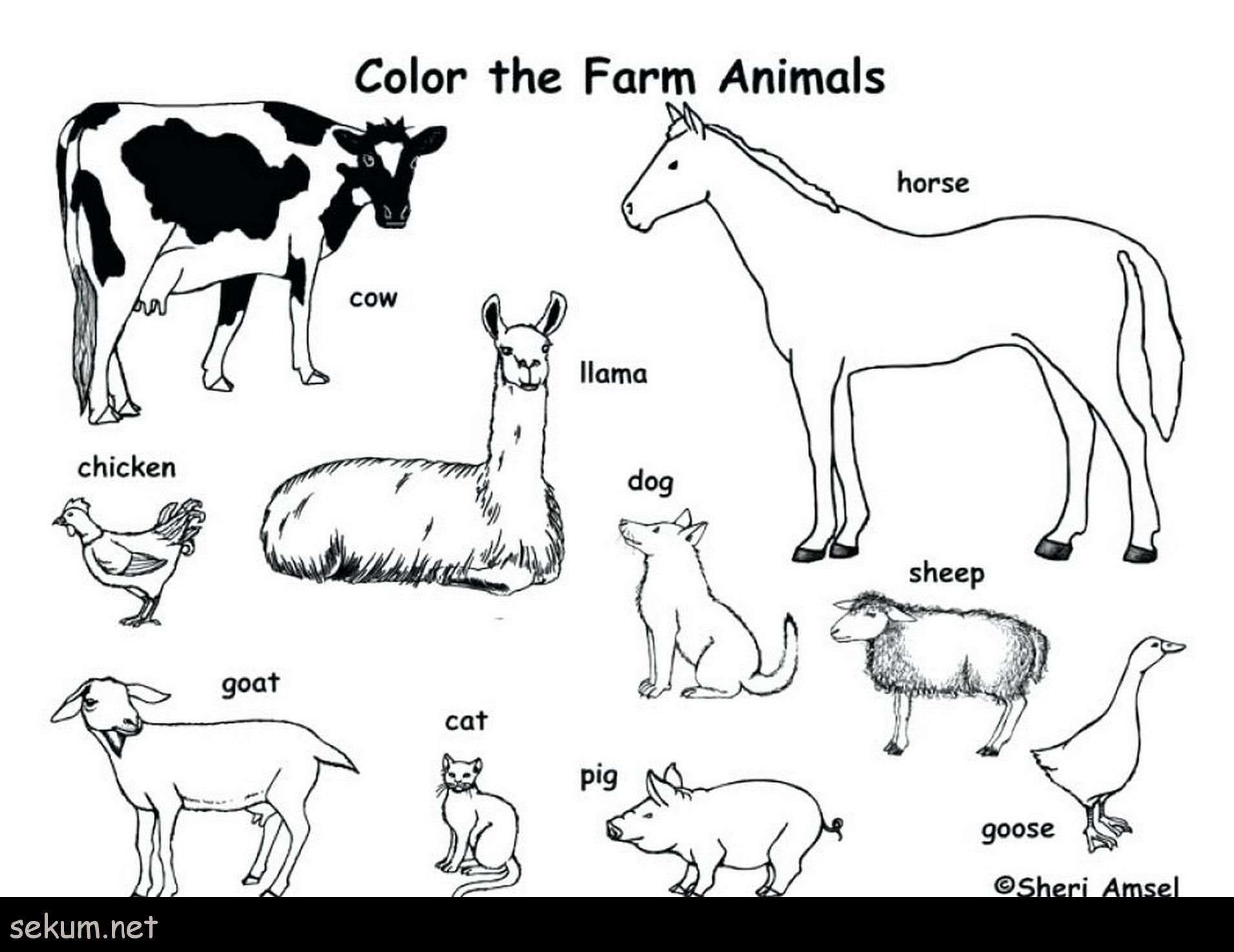 14++ Farm animal coloring pages ideas in 2021