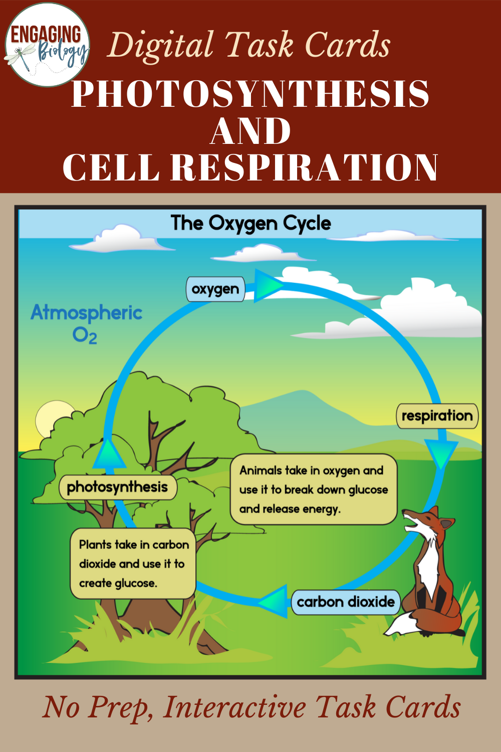 Photosynthesis and Cell Respiration Digital Task Cards in